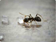 fotolia ant control • ant exterminator • ant killer • antbed killer • kill antbeds